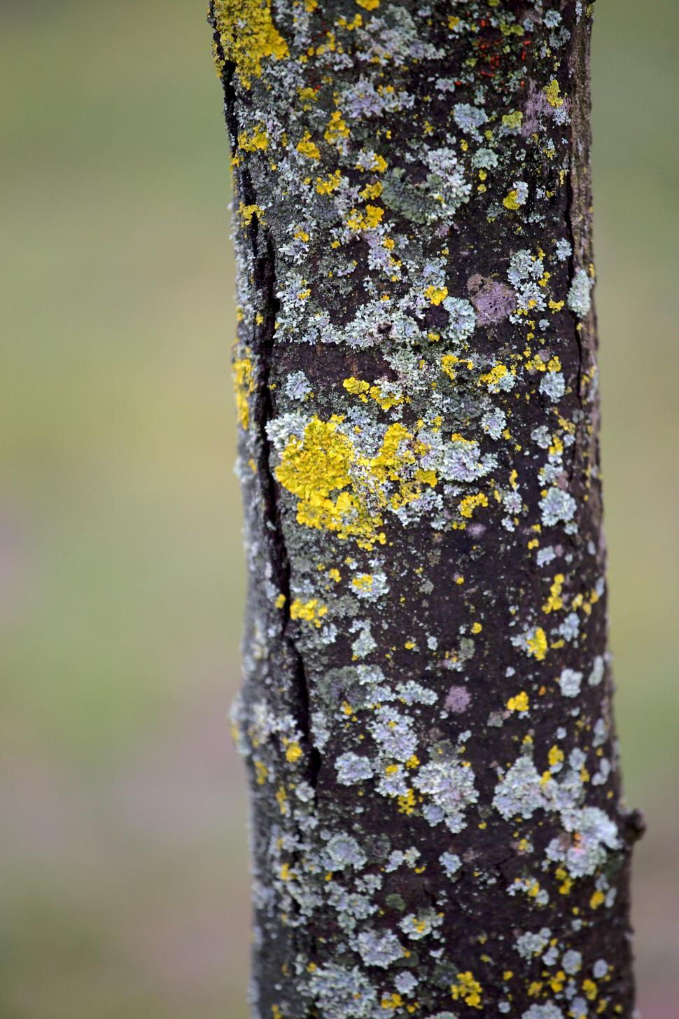 Download Free Stock HD Photo of Tree detail  Online