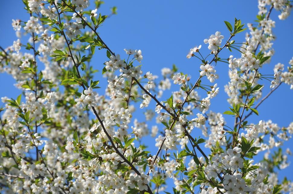 Download Free Stock HD Photo of Flowers on branches Online