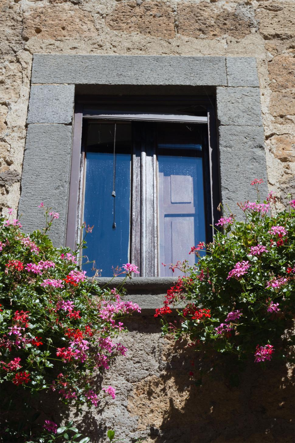 Download Free Stock HD Photo of Flowers and Window Online