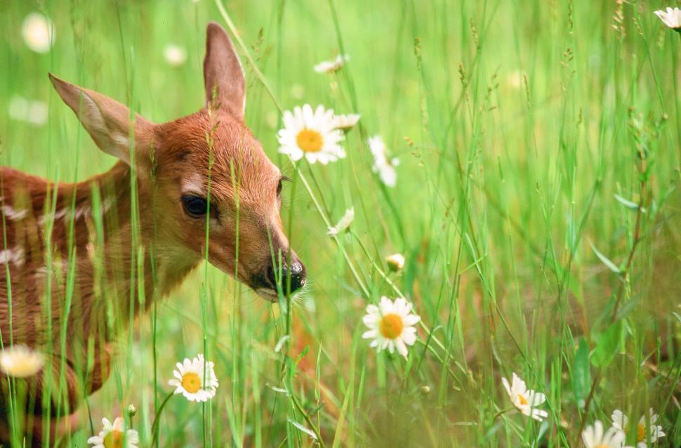 Download Free Stock HD Photo of Deer fawn Online