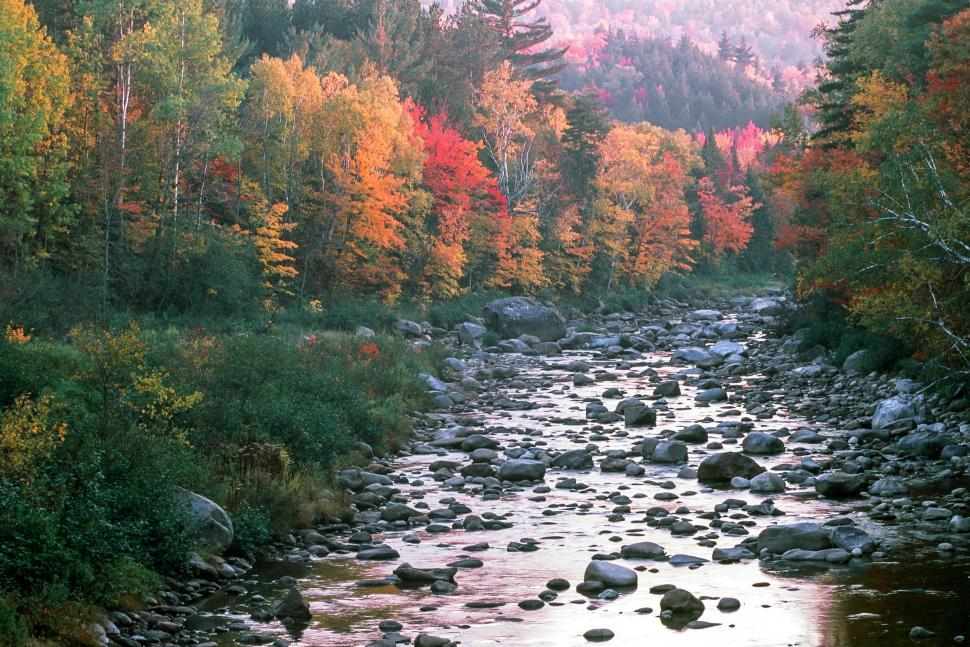 Download Free Stock HD Photo of Creek through Deciduous Forest Online