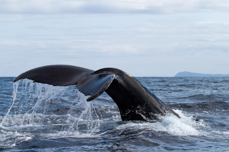 Download Free Stock HD Photo of Whale tail - Deep Dive Online