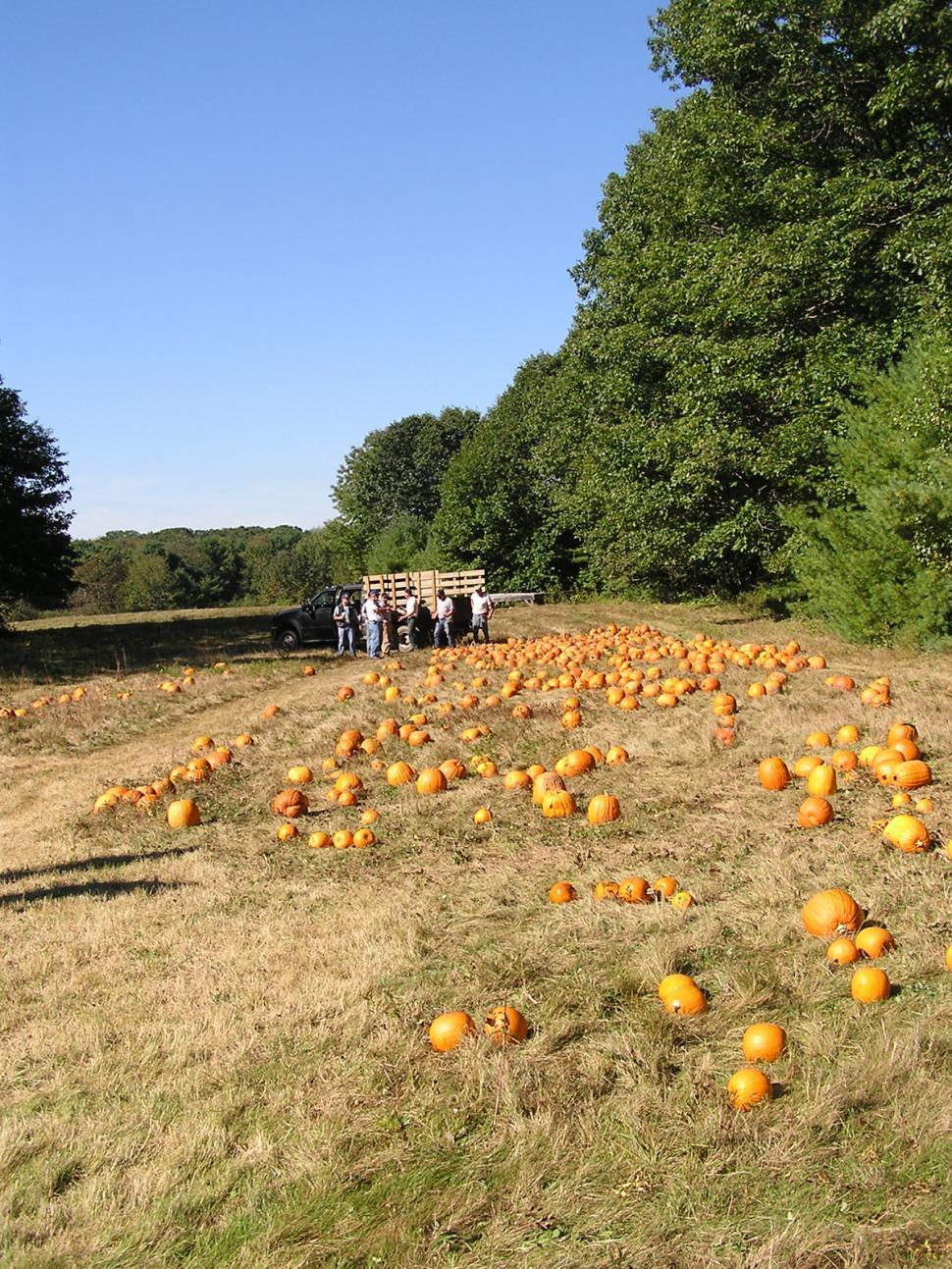 Download Free Stock HD Photo of Field of Pumpkins Online