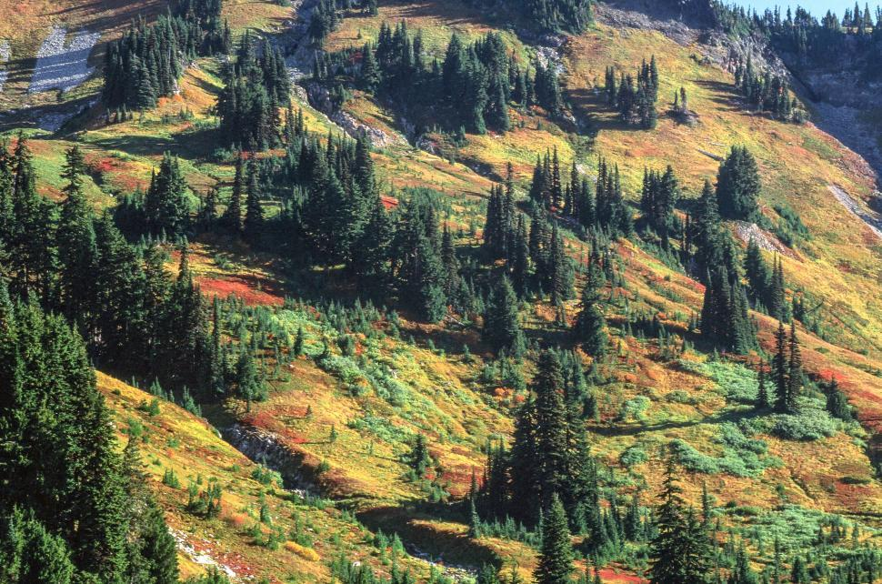 Download Free Stock HD Photo of Mount Rainier National Park Online