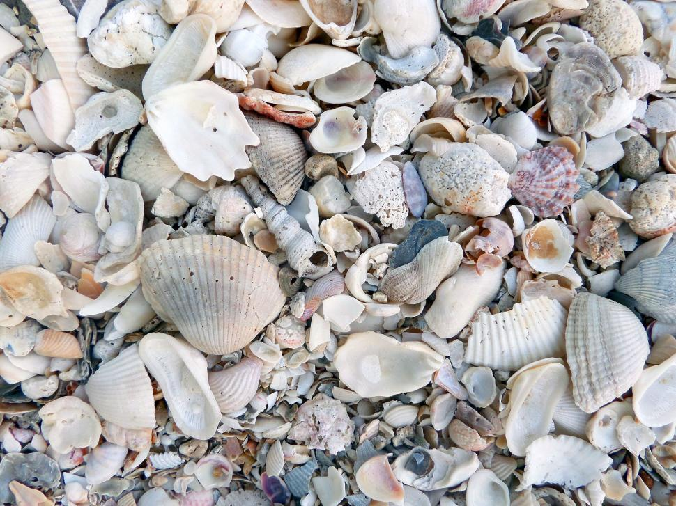 Download Free Stock HD Photo of Broken seashell texture close-up Online
