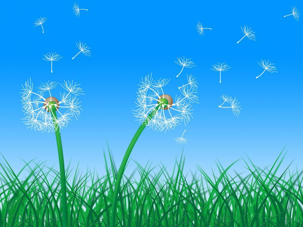 Download Free Stock HD Photo of Sky Grass Represents Dandelion Hair And Dandelions Online