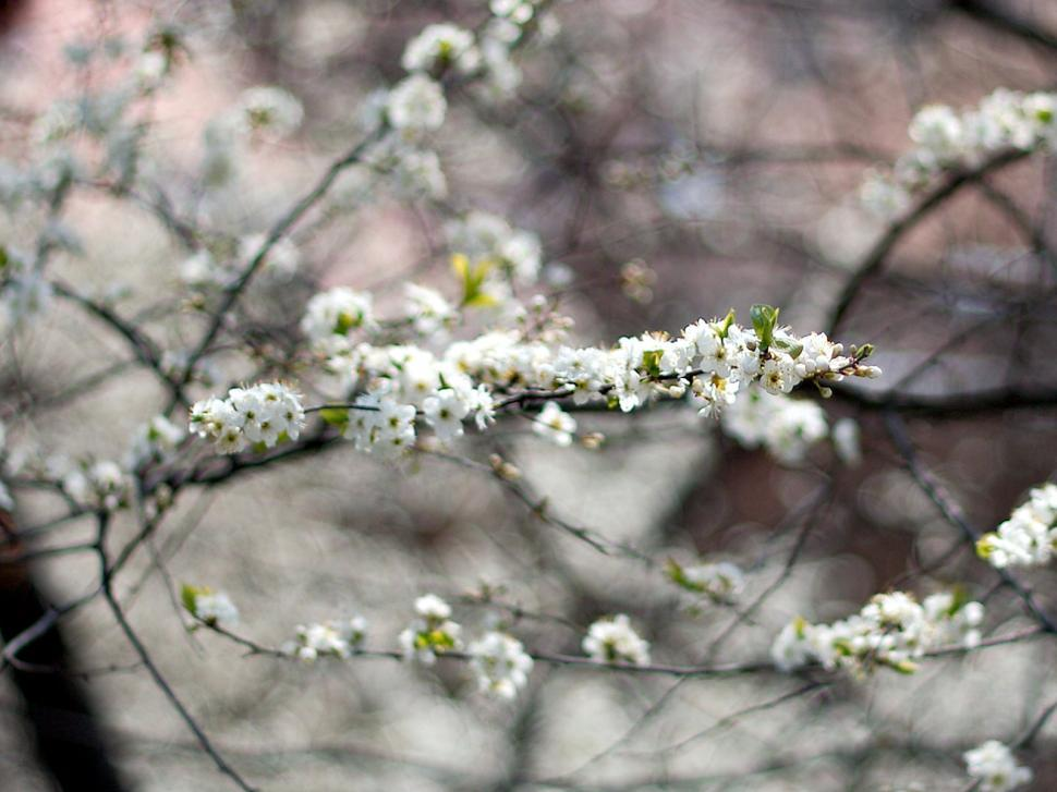 Download Free Stock HD Photo of Plum flowers detail Online