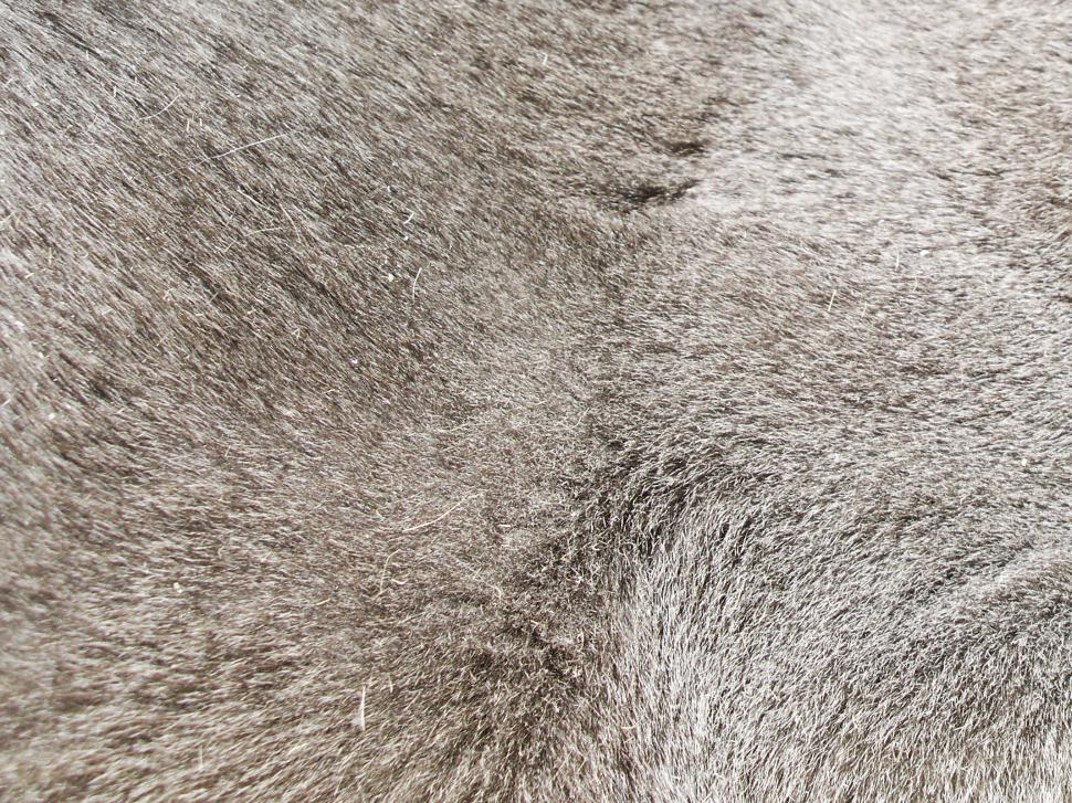 Download Free Stock HD Photo of Gray Fur Texture Online