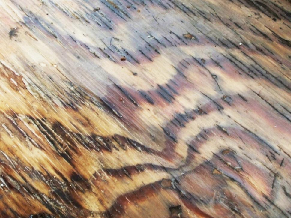 Download Free Stock HD Photo of Wood Online