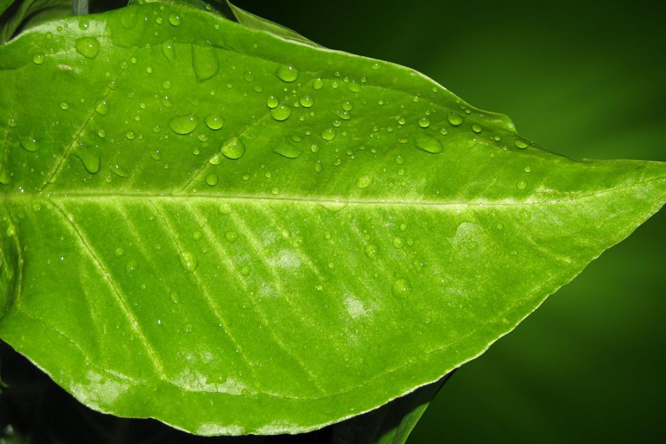 Download Free Stock HD Photo of Rain Drops on a leaf Online