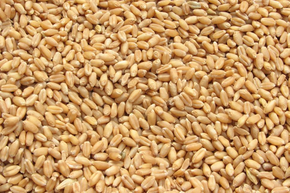 Download Free Stock HD Photo of Wheat Grains Online