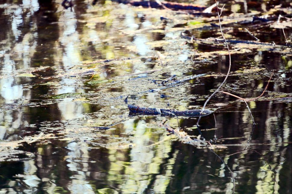 Download Free Stock HD Photo of Lake detail Online