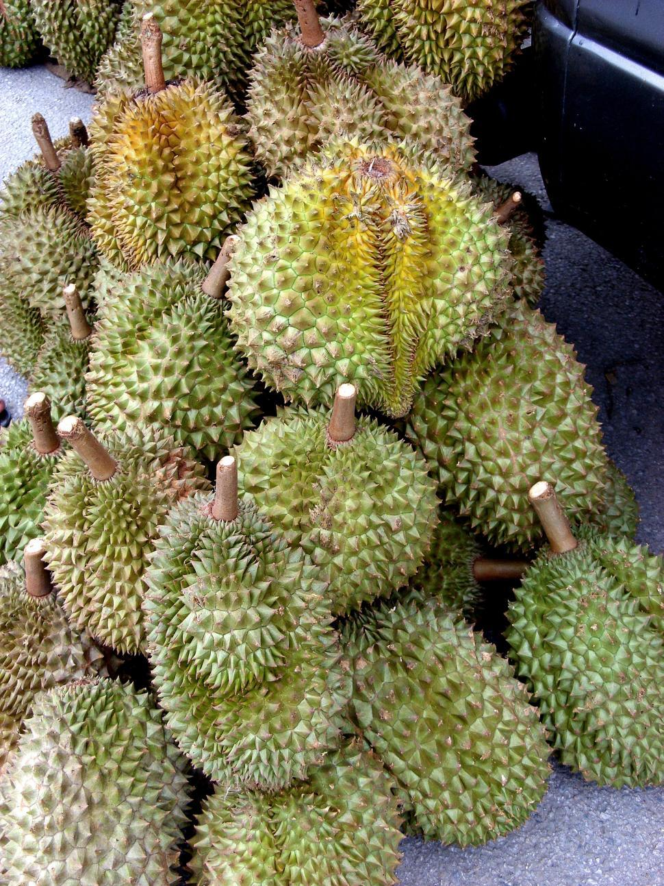 Download Free Stock HD Photo of Durian fruit Online