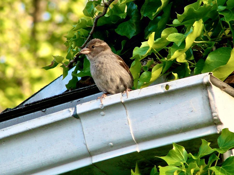 Download Free Stock HD Photo of Bird on Gutter Online