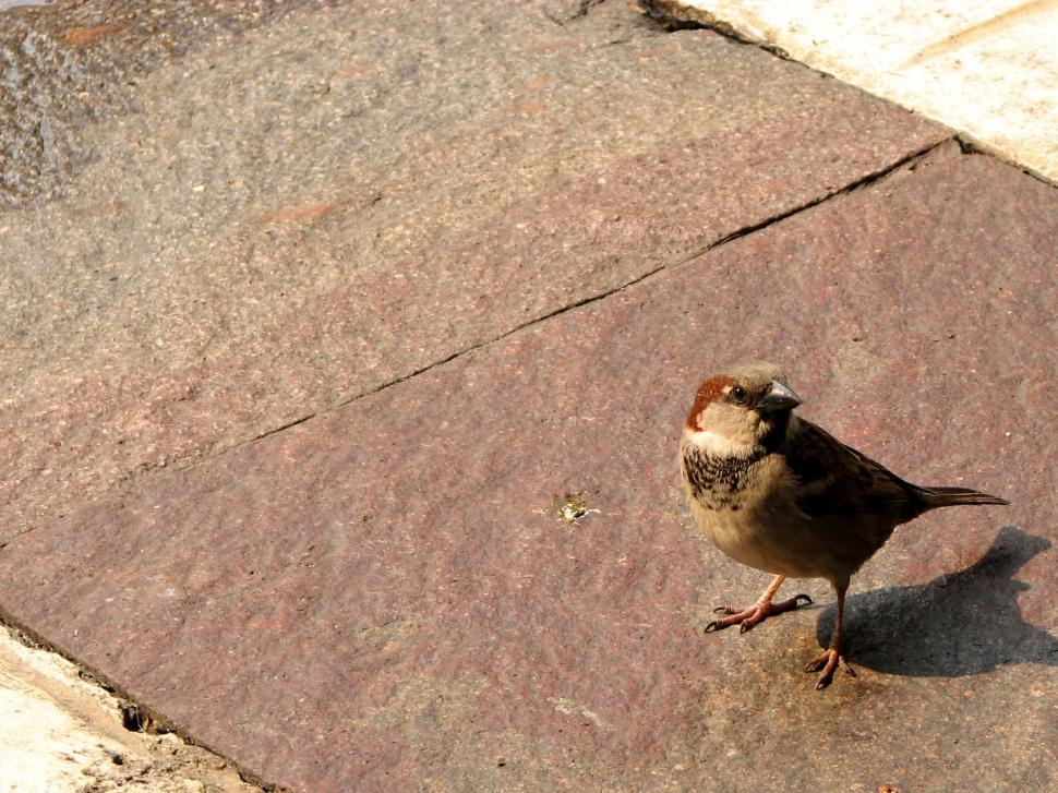 Download Free Stock HD Photo of Sparrow Online