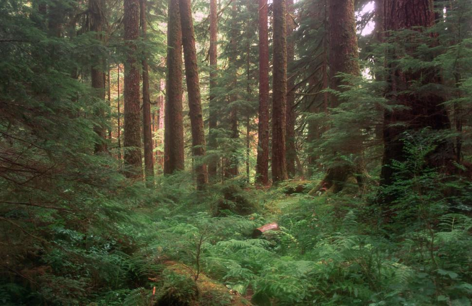 Download Free Stock HD Photo of Lush Olympic National Park Online