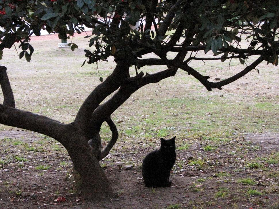 Download Free Stock HD Photo of Cat under a tree Online