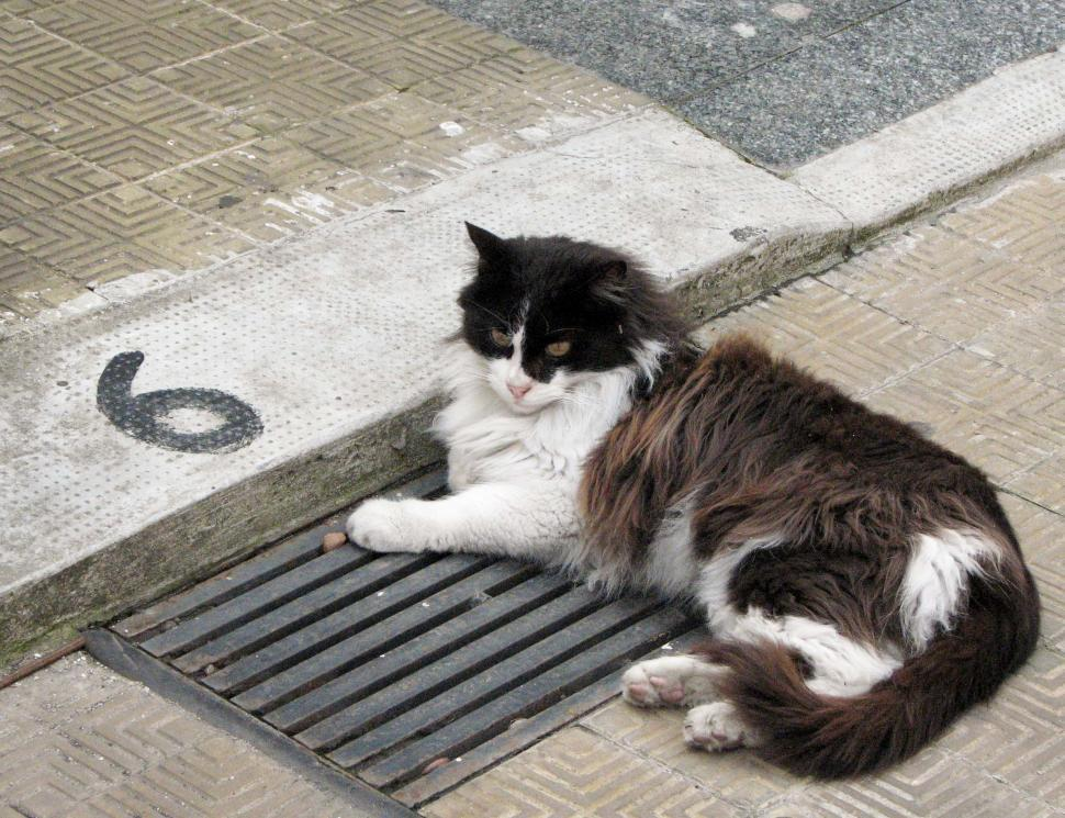Download Free Stock HD Photo of Cat on Sewer Grate Online