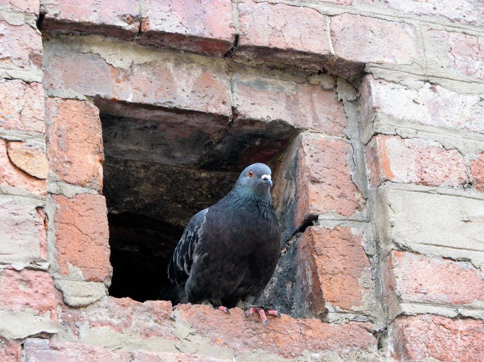 Download Free Stock HD Photo of Pigeon Online