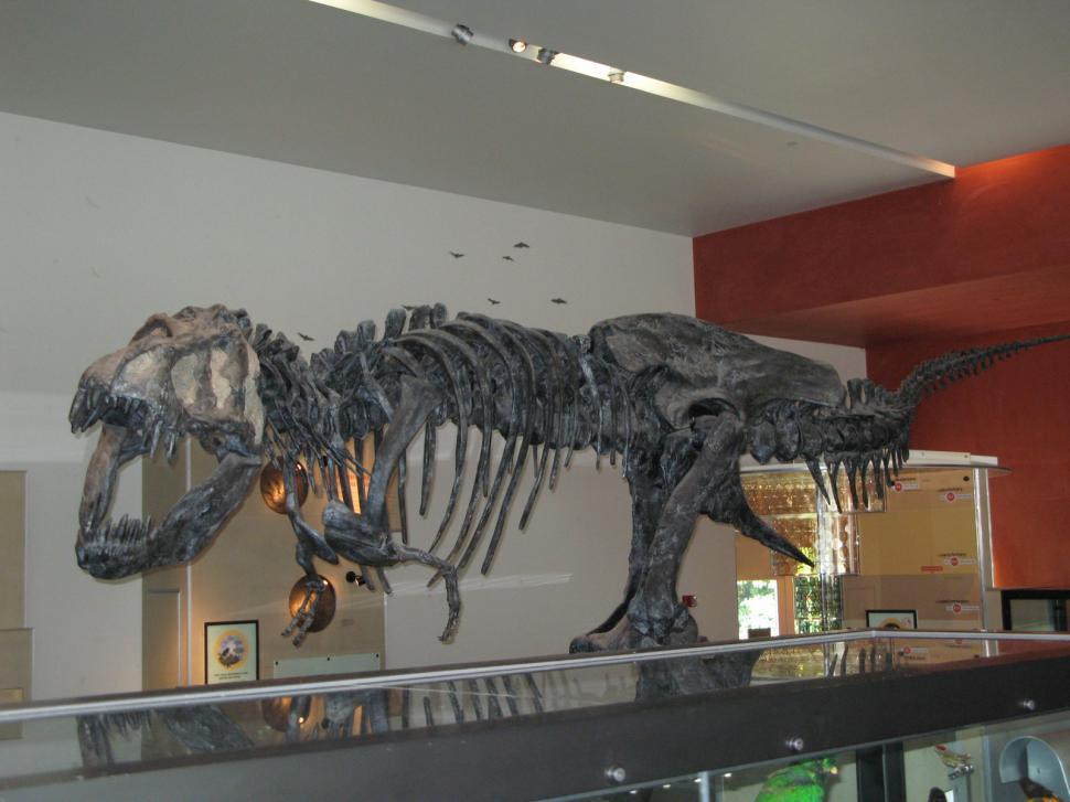 Get Free Stock Photos of T-Rex Online | Download Latest Free