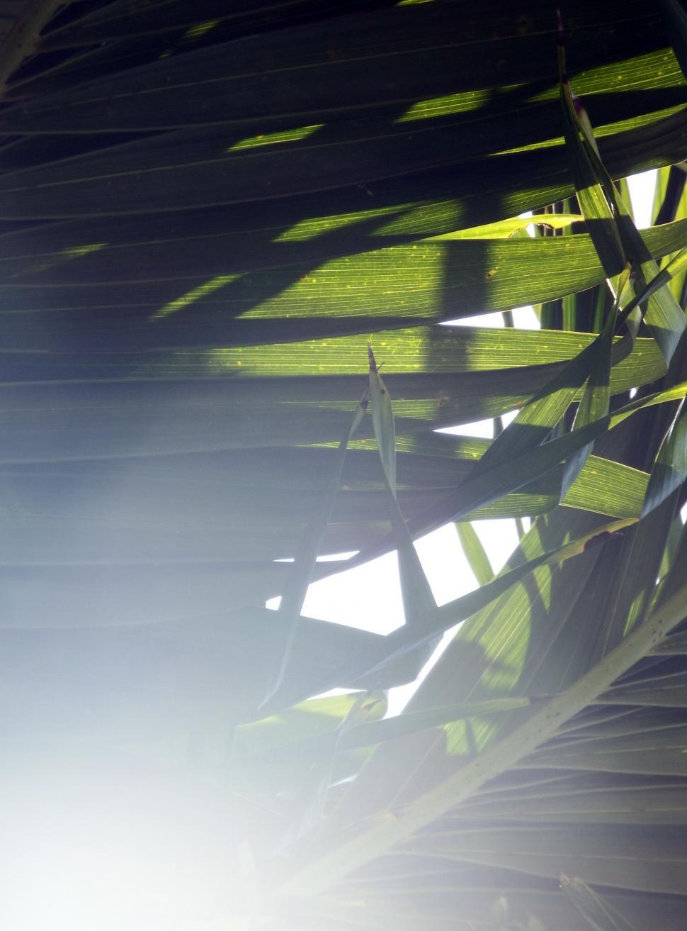 Download Free Stock HD Photo of Sunlight Shining through the Tropical Forest  Online