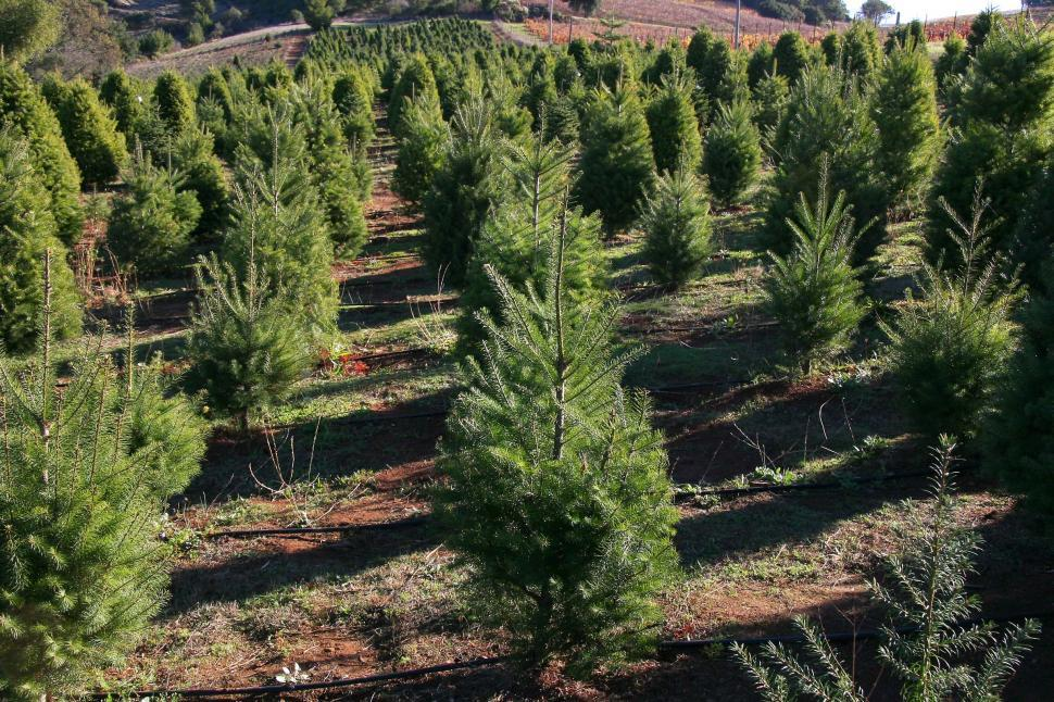 Download Free Stock HD Photo of Tree farm Online