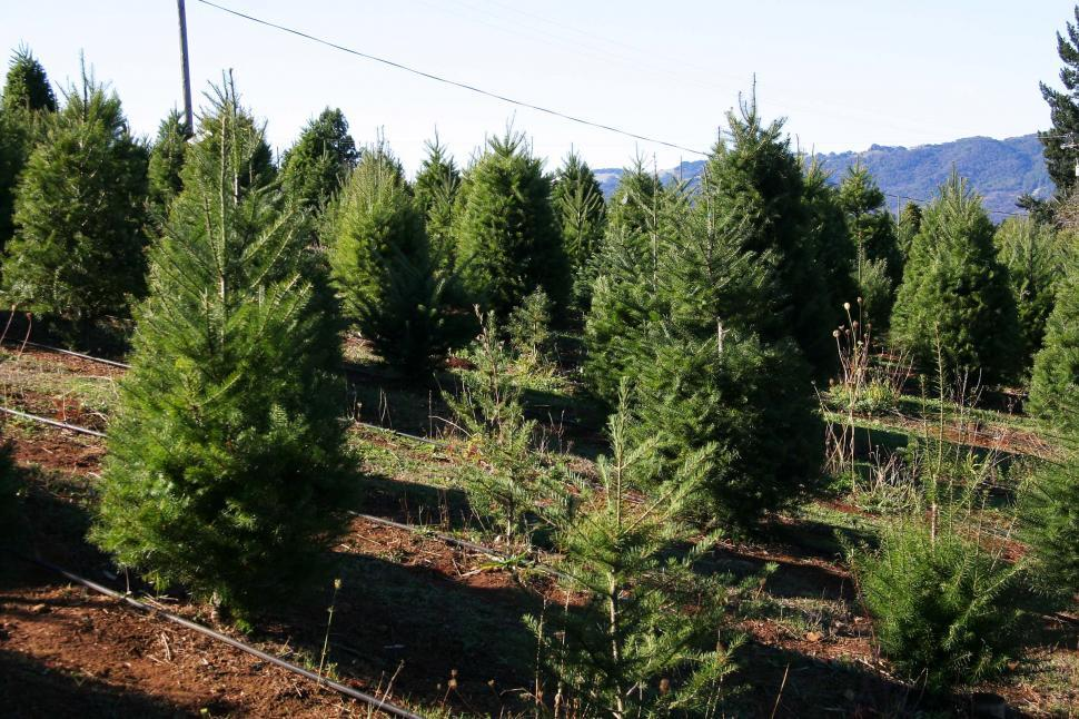 Download Free Stock HD Photo of Christmas tree farm Online