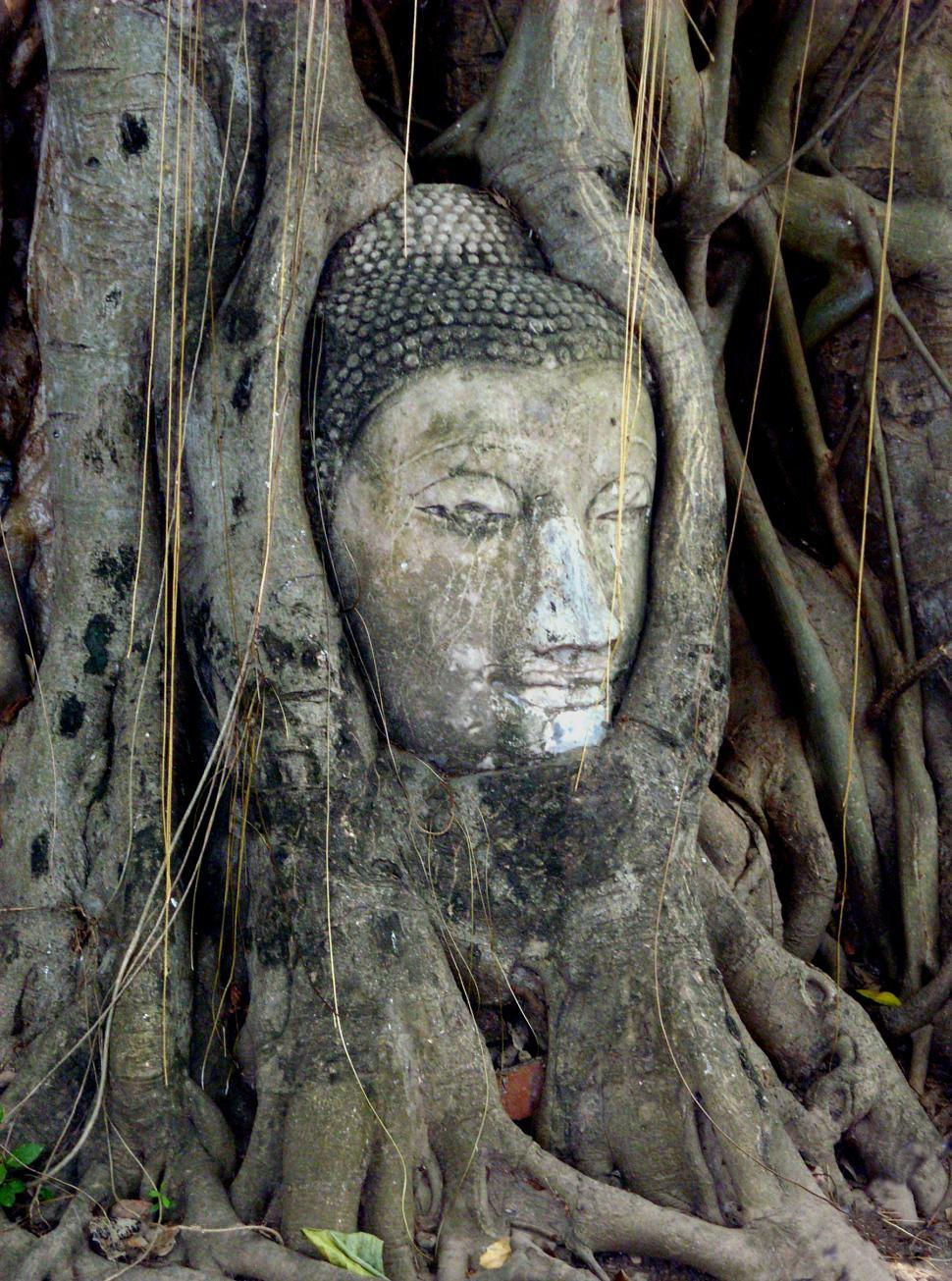Download Free Stock HD Photo of Buddha head entwined in roots Online