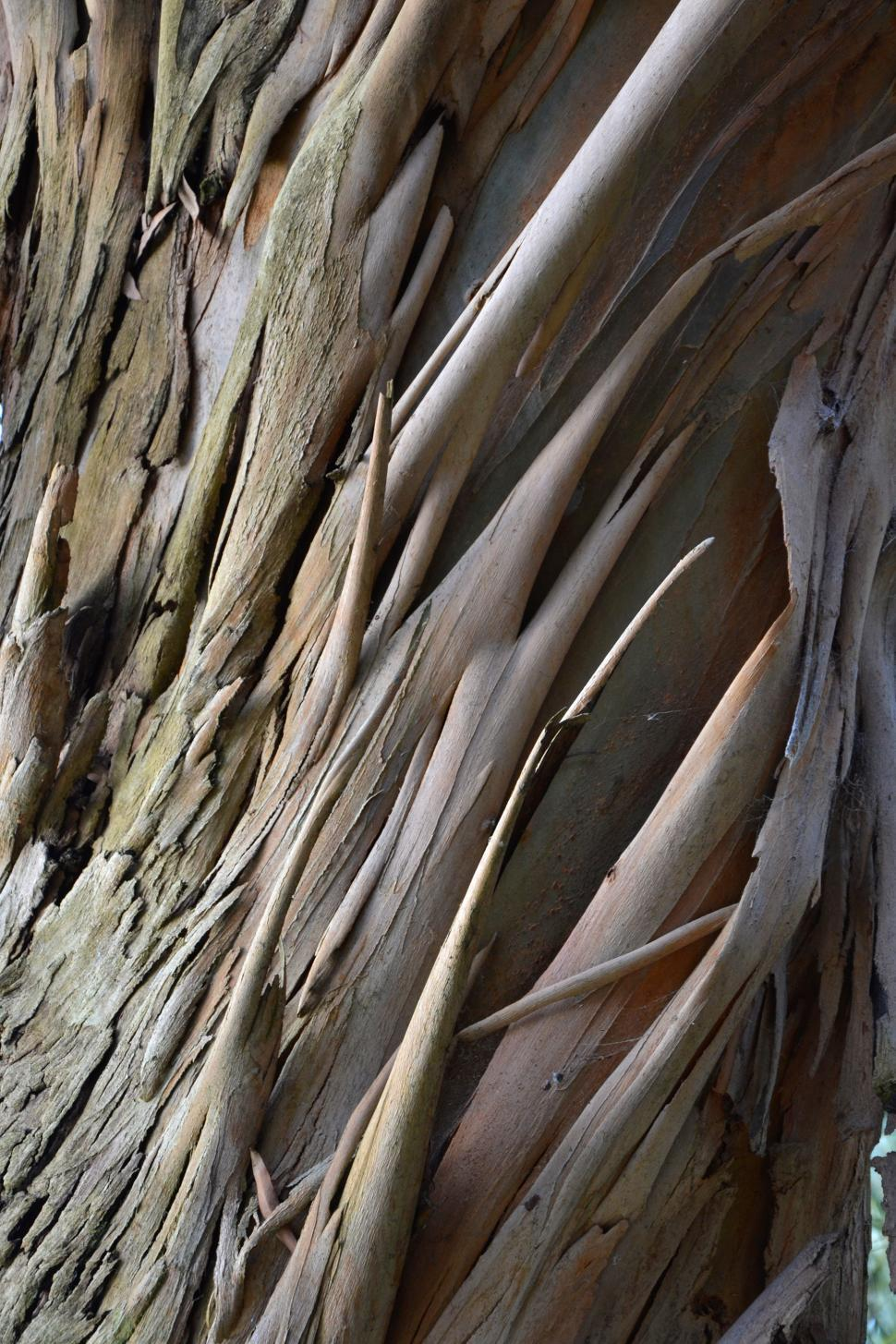 Download Free Stock HD Photo of Spinning Gum bark  Online