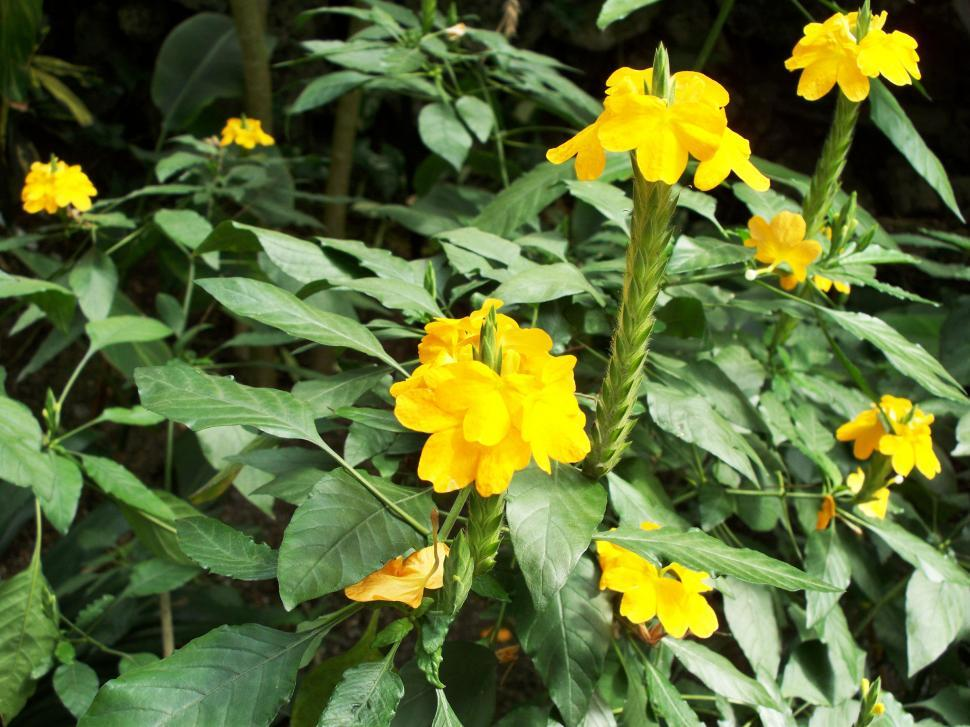 Download Free Stock HD Photo of Yellow Flowers Online