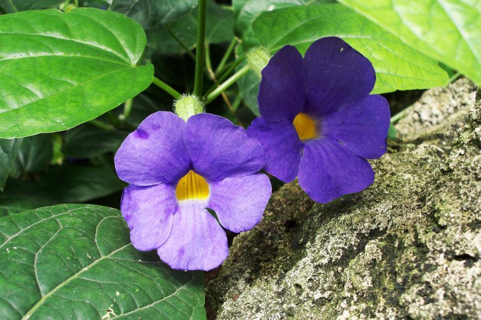 Download Free Stock HD Photo of Purple Flowers Online
