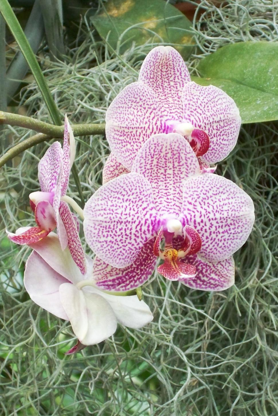Download Free Stock HD Photo of Flowers - orchids Online