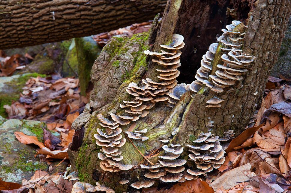 imageDesc for cat Fungi Growing on a Dead Tree Stump page Landscapes & Nature