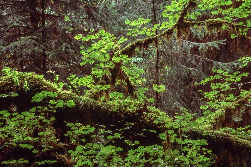 Download Free Stock HD Photo of Hoh Rain Forest Online