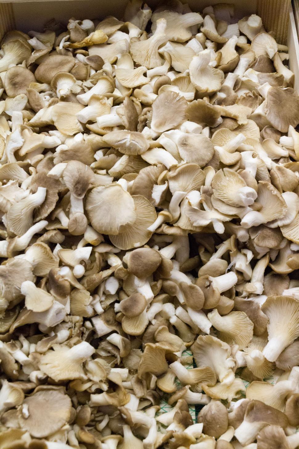 Shiitake mushrooms in a box