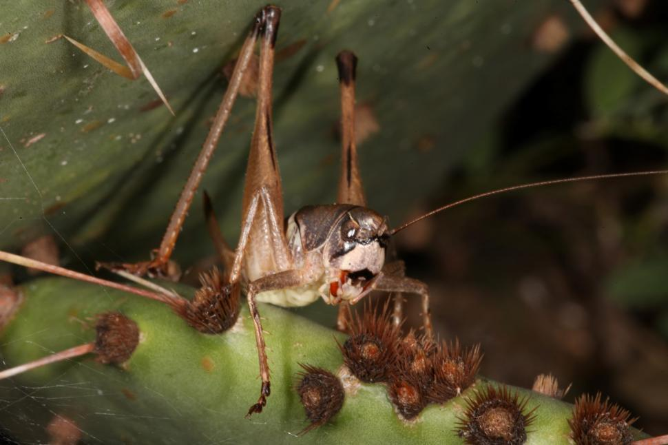Download Free Stock HD Photo of Cricket on cactus   Online