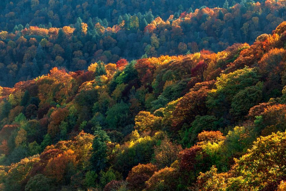 Download Free Stock HD Photo of Leaves turning in Great Smoky Mountains National Park Online