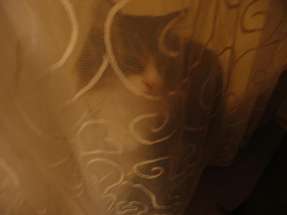 Download Free Stock HD Photo of Cat behind curtain Online