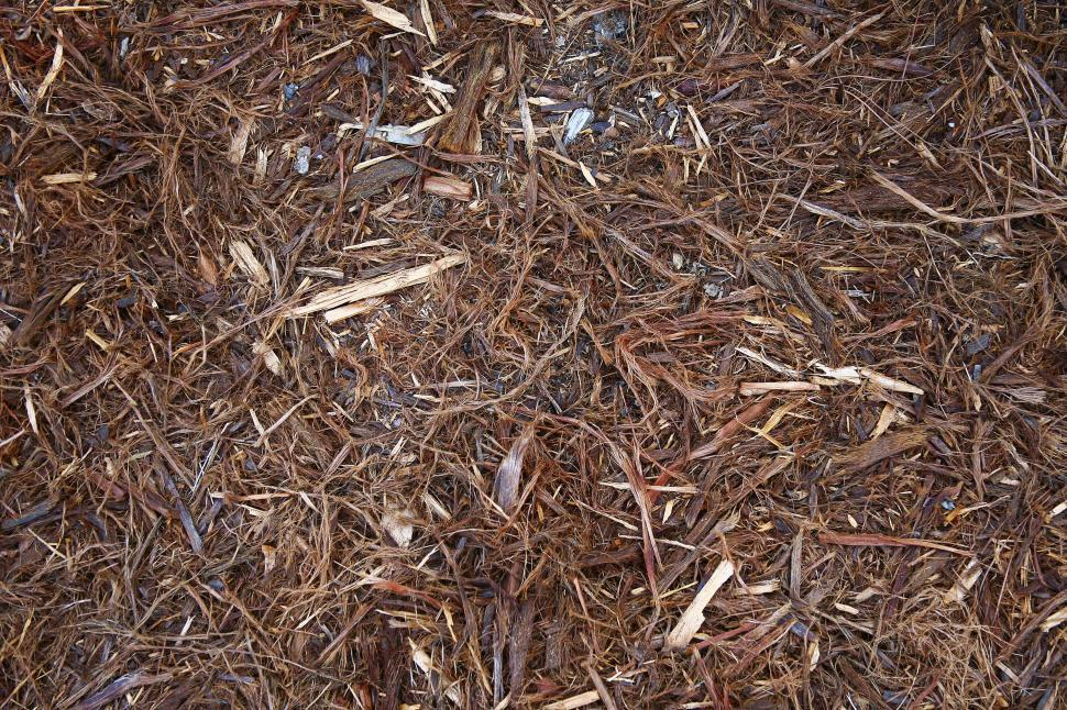 Download Free Stock HD Photo of Shredded Bark Online