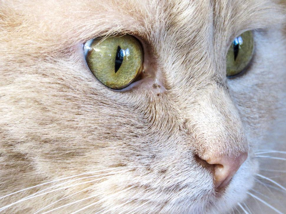 Download Free Stock HD Photo of Close-up of cat Online