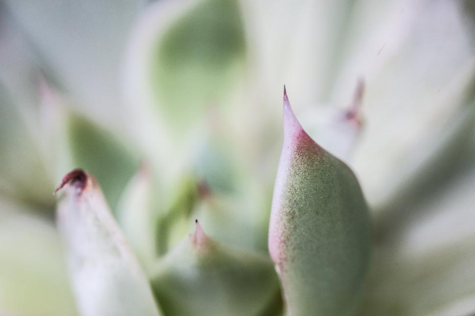 Download Free Stock HD Photo of Succulent tip Online