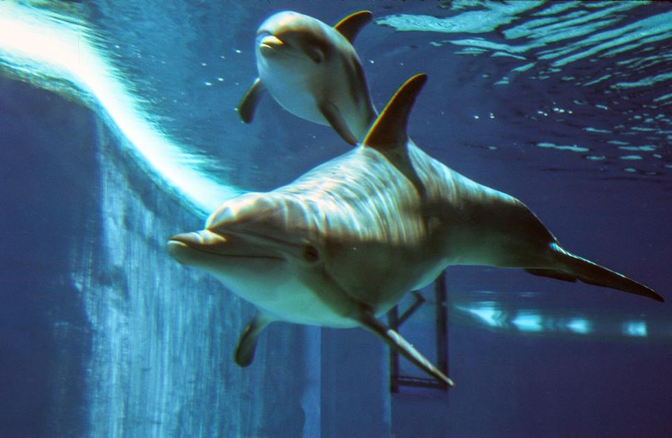 Download Free Stock HD Photo of Bottlenose dolphins at Dolphin Habitat at The Mirage Online