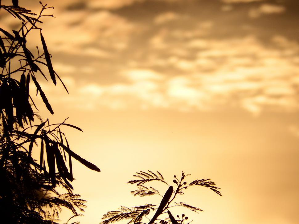 Download Free Stock HD Photo of Tropical Trees Silhouette at Sunset  Online