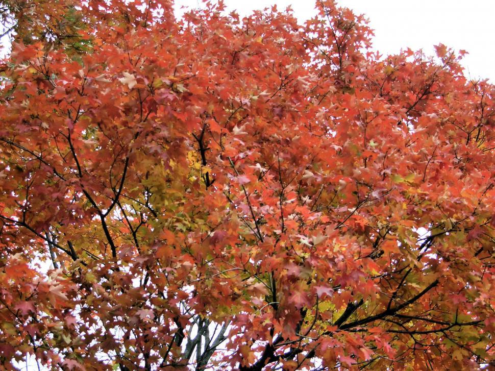 Download Free Stock HD Photo of Autumn Comes Online