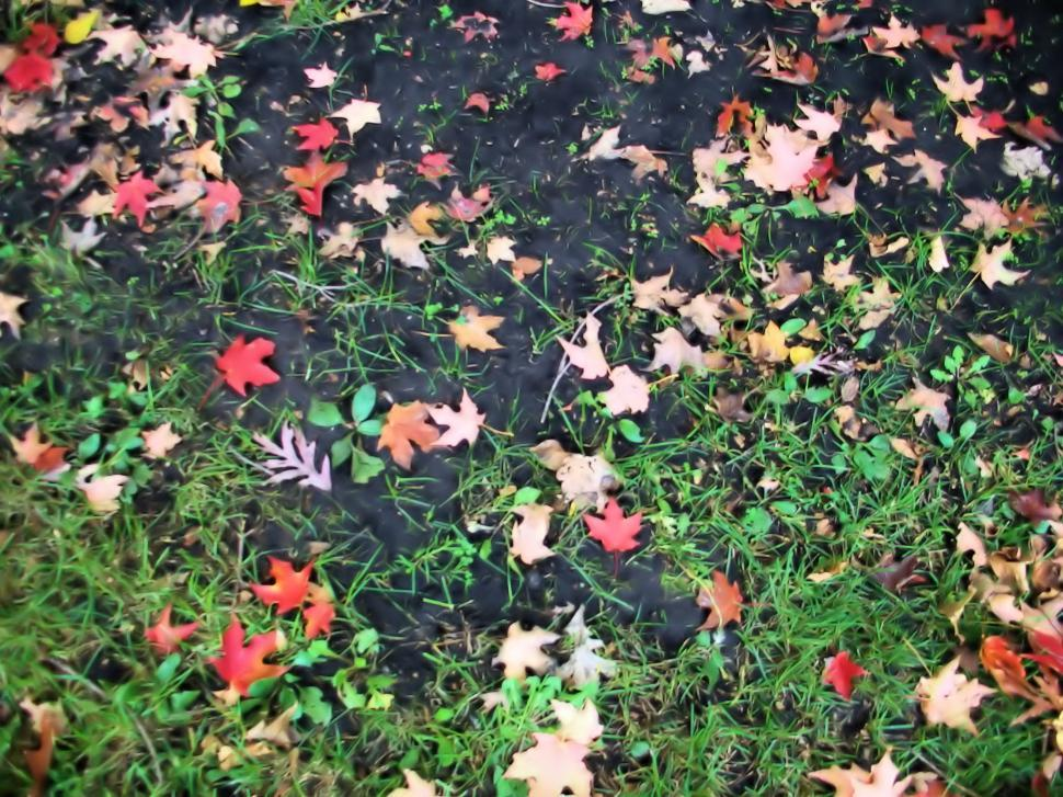 Download Free Stock HD Photo of Fall Online