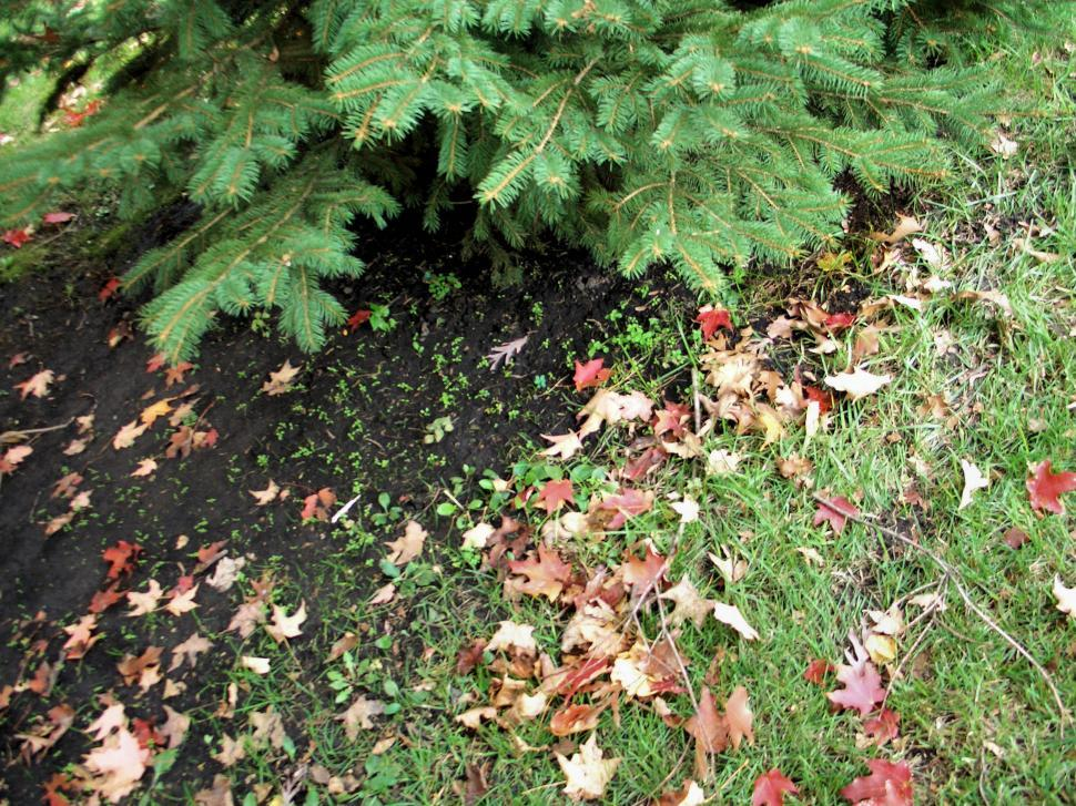 Download Free Stock HD Photo of Fall Leave Online
