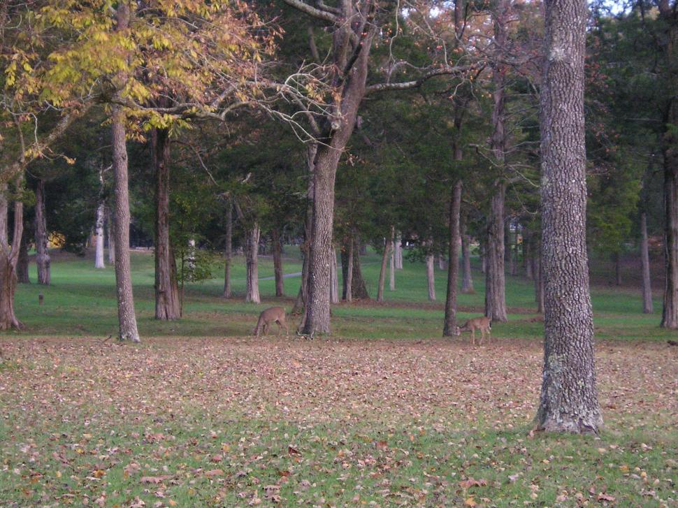 Download Free Stock HD Photo of Deer at Mammoth Cave National Park Online