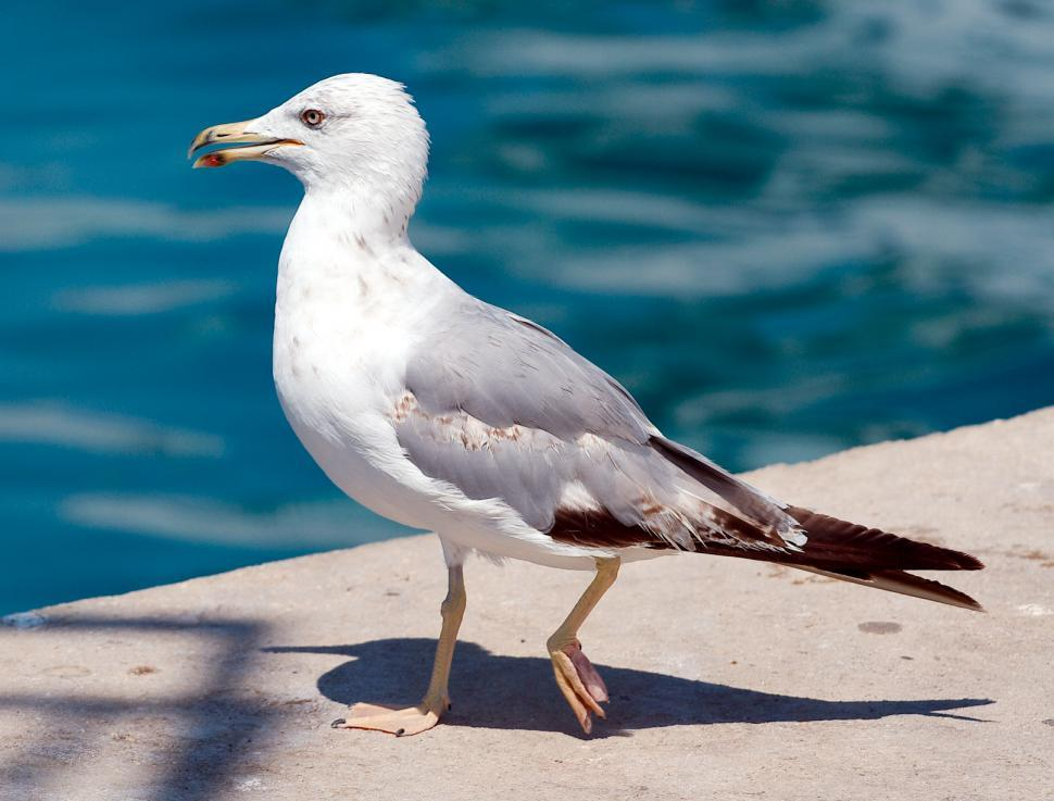 Download Free Stock HD Photo of The seagull Online
