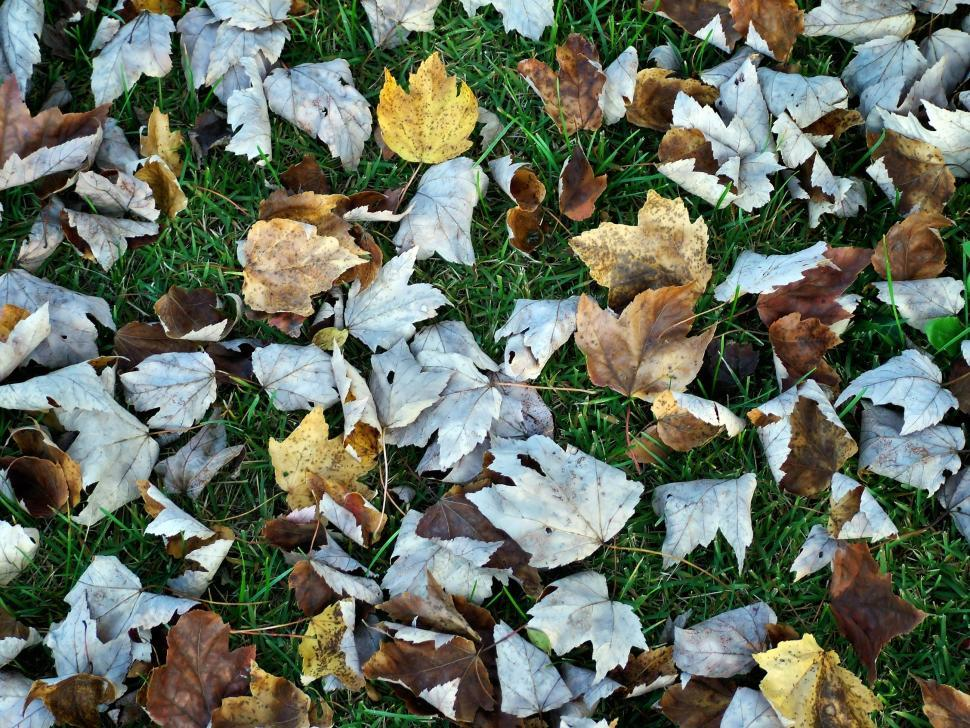 Download Free Stock HD Photo of Autumn Ground Background Online