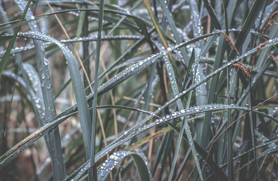 Download Free Stock HD Photo of Dew Drops Online